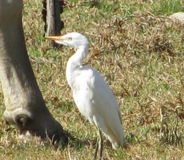 egret.png
